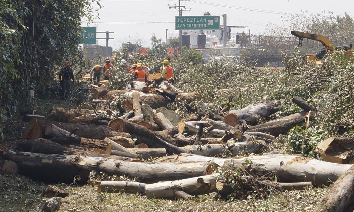Aspecto de la tala de más de dos mil árboles para construir el Paso Exprés, en Cuernavaca, Morelos Foto: David Monroy)